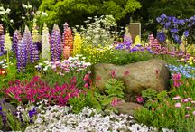 Blumen- / Gemüsebeet / Schöne Bilder rund um den Garten.