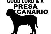 Presa Canario