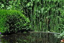 Water in the Garden (Streams, Ponds, Fountains, Birdbaths) / by Alison Conliffe