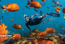 PADI Freediving Courses / JOIN THE FREEDOM AND START FREEDIVING!  Freediving is about inward power, discipline and control. If you've always wanted to enter the underwater world quietly, on your own terms, staying as long as your breath allows, then freediving is for you.