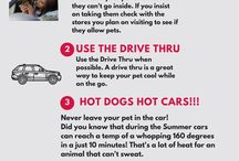 Hot dogs in Hot Cars / This will give you some basic info how why leaving your pet in your car in the heat can be dangerous to their life.