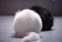 Cotier Katzenbilder / Cat Pics