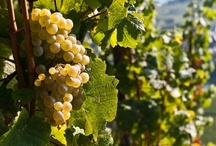 Riesling / What is Riesling like?