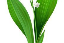 Цветы, комнатные растения