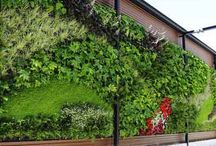 Green Wall / The best green walls created in buildings for Paisajismo Urbano