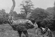 Maori History / by Niknik Owens