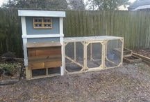 Chickens and Their Homes / by Miss Prickly
