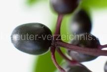 Kräuter und Beeren