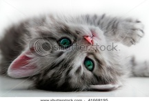 kittens / by Brenda Johnson
