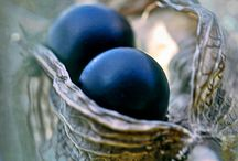 Seed pods / There's something about seed pods