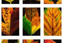 Leaves, A rootprint