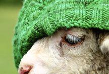 Everything Farm / by Megan Ferguson