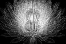 Fleur Amor II / by Dulce DotCom