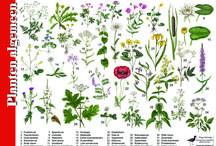 planten en dieren