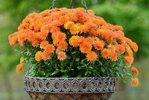 plantas y flores para él hogar.