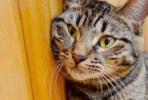 Cat Wellness Care