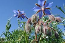 saniplante / vente en ligne de plantes médicinales , de gélules de plantes et d'huiles essentielles bio