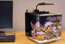 home aquariums for sale