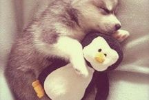 Hug a penguin / Looks like that dog is so tired he decided to tack his toy to bed