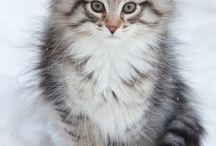 Kedi dost canlılar