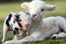 It's All About Farm Animals!