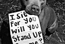 Pitbull (and all doggies) love