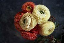 Flowers / by Deepa Kumaraiah