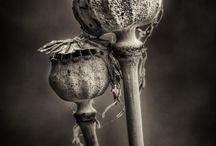 Botanisch geaard