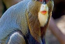 Scimmie- Varietá