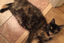 Cats we've neutered