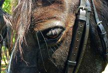 call me equestrian