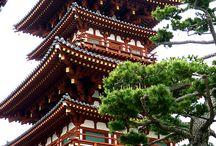 Nara l'animalière / Entre son histoire, ses célèbres daims, ses paysages, temples et sanctuaires, Nara à de quoi vous dépayser.