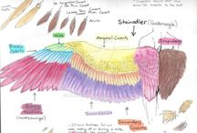 Wings yay:)))
