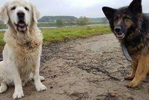 Dogs love <3
