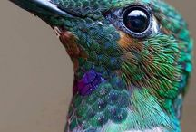 Pássaros (birds)