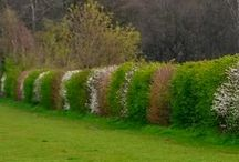 Mountain Hedges