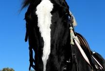 Horses / by Jenna VanBuskirk
