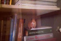 Hamster / Хомочка**