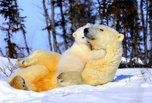 Wild Animals / by Love My Pet Pics