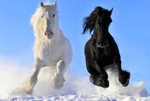 Magie der Pferde