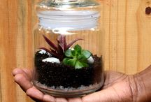 Jar Terrariums / Jar Terrarium : A terrarium is a collection of small plants growing in a transparent, sealed container. Inside a terrarium's walls, many natural processes may be observed: photosynthesis, respiration and the water cycle. We have picked this archaic jar and created a womderful ecosystem of its own!