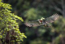 """Mata Atlântica / O fotógrafo Octavio Campos Salles mostra a diversidade da parte melhor preservada do bioma em seu novo livro """"Ka'á-eté: A Floresta Atlântica Intocada"""": http://abr.ai/1uFJipP"""