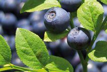 Blueberries / by Deborah Goulekas
