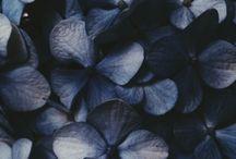 blue in