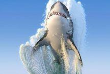 Океан / Самые опасные морские хищники мирового океана
