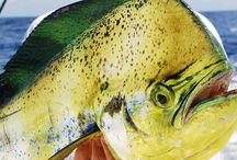 Cancun fishing / Best sportfishing in cancun Mexico.