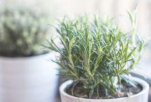 ハーブ 植物