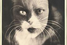 "Wanda Wulz, ""Io + gatto"", gelatin silver print, 1932, Metropolitan Museum of Art,"