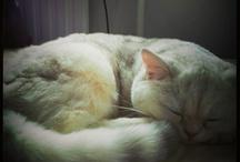 My originals: My cat