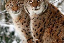 animali feroci